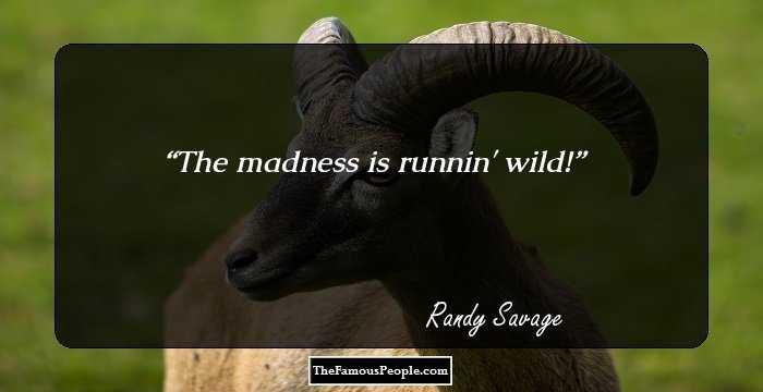 randy-savage-83986.jpg